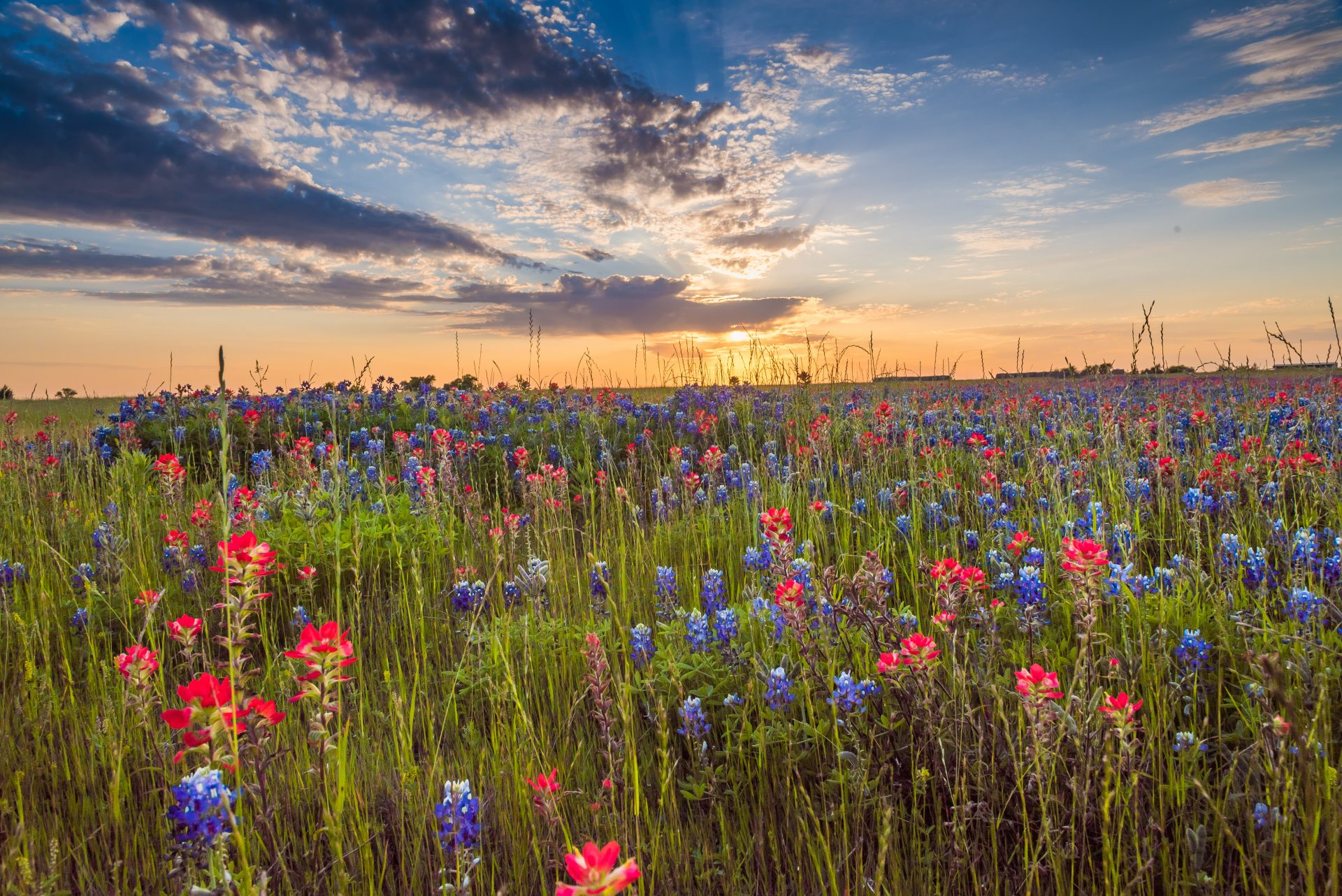 wild flowers in pasture and sky