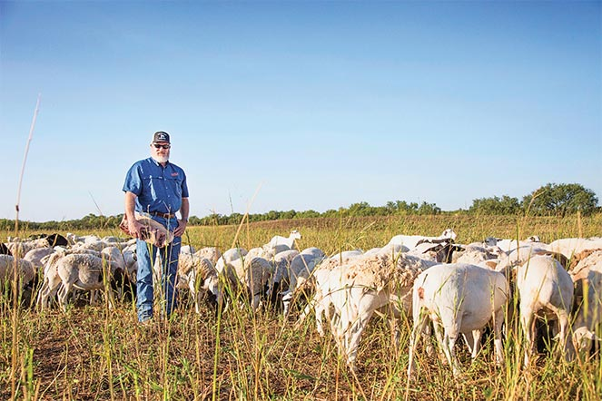 Lone Star Ag Credit customer standing with his sheep in the field.
